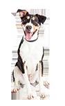 כלב-במושב_אילוף כלבים בוגרים