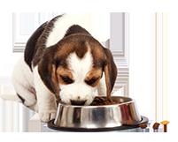 כלב-במושב_ארוחת בוקר וערב