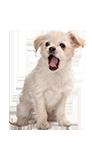כלב-במושב_חינוך גורים