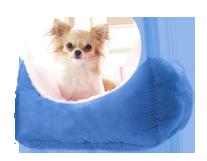 כלב-במושב_שינה בחדרים אישיים או משותפים