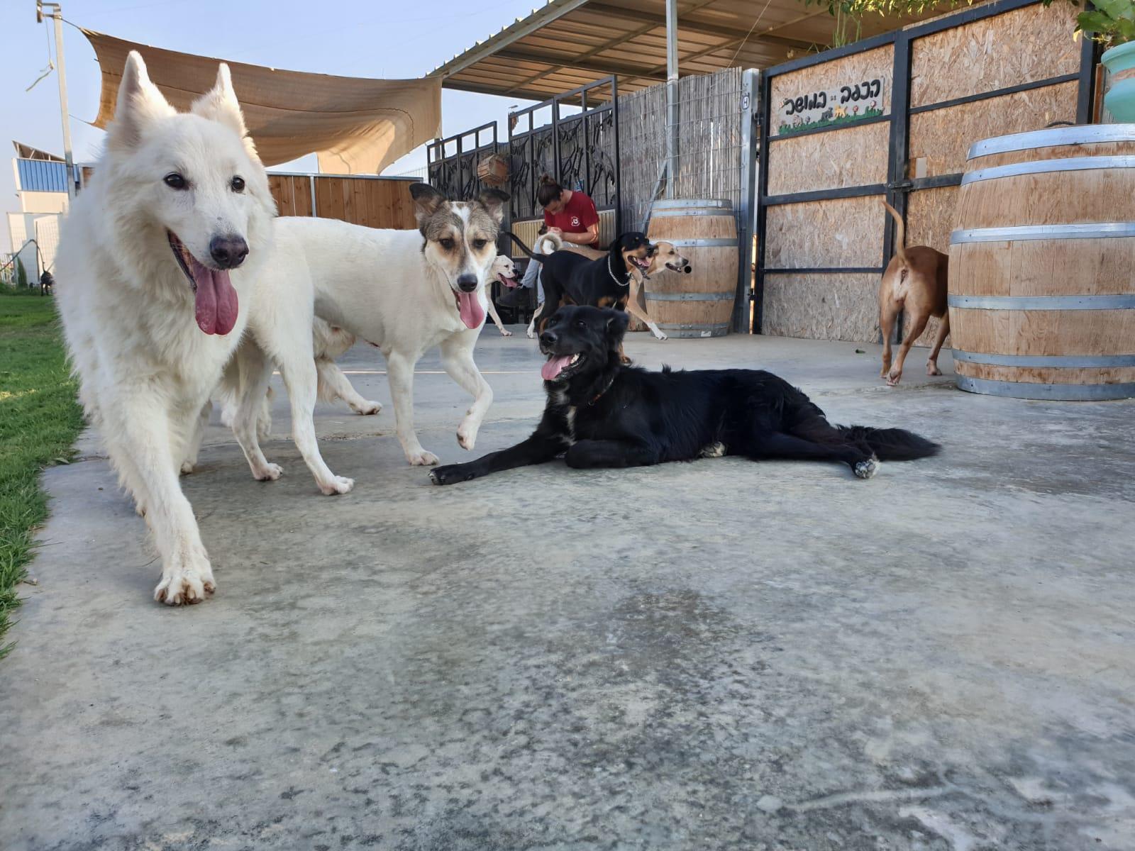 כלבים בפנסיון ביתי